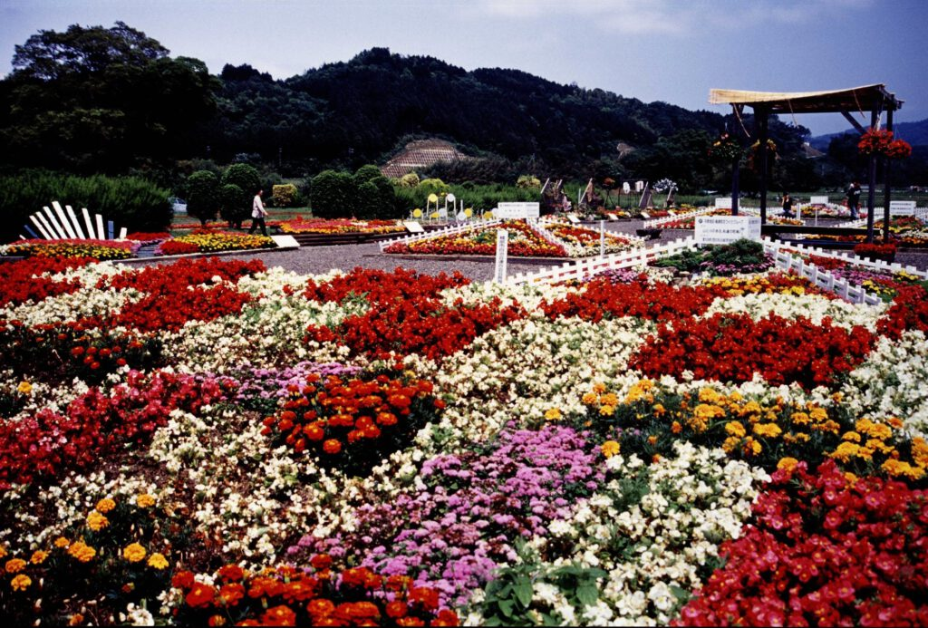 Flowers Blooming in Profusion