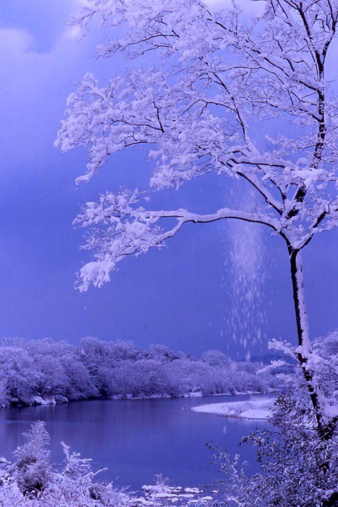 「由良川雪景」