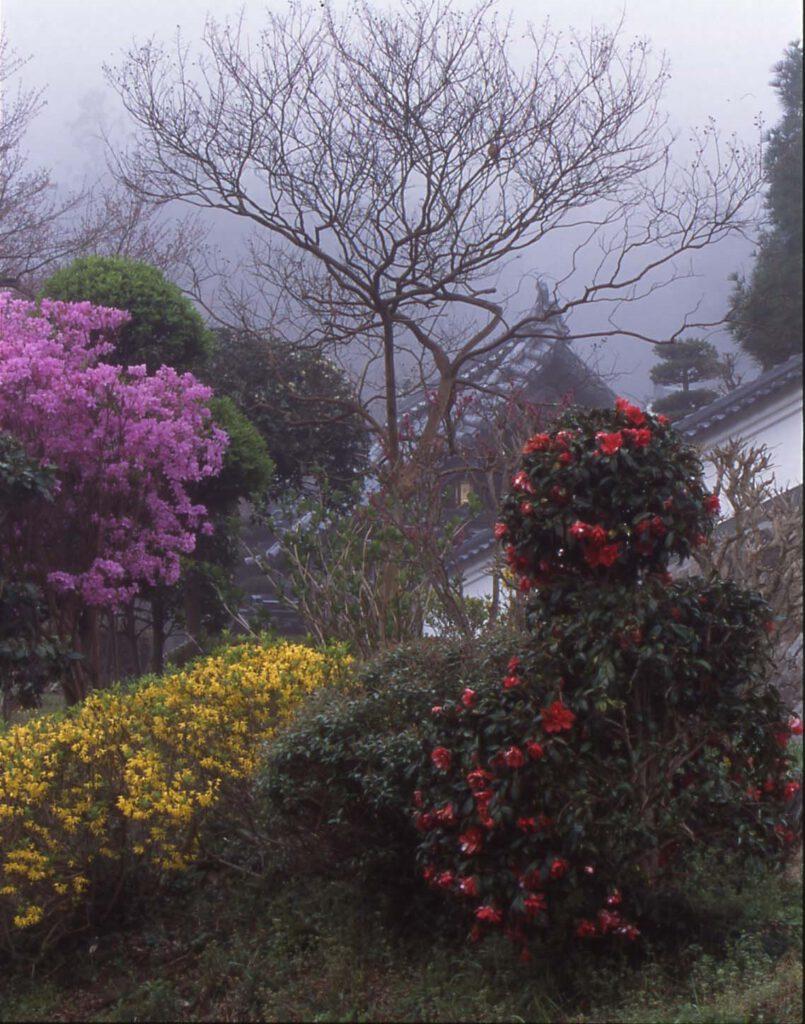 「霧の花寺」