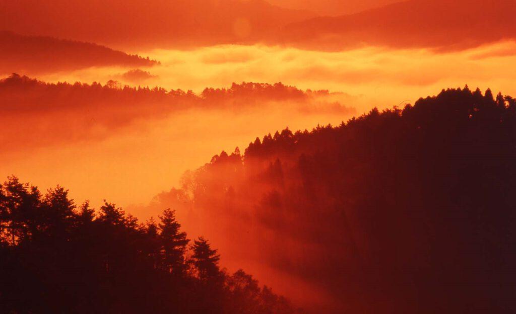 「朝霧染まる」