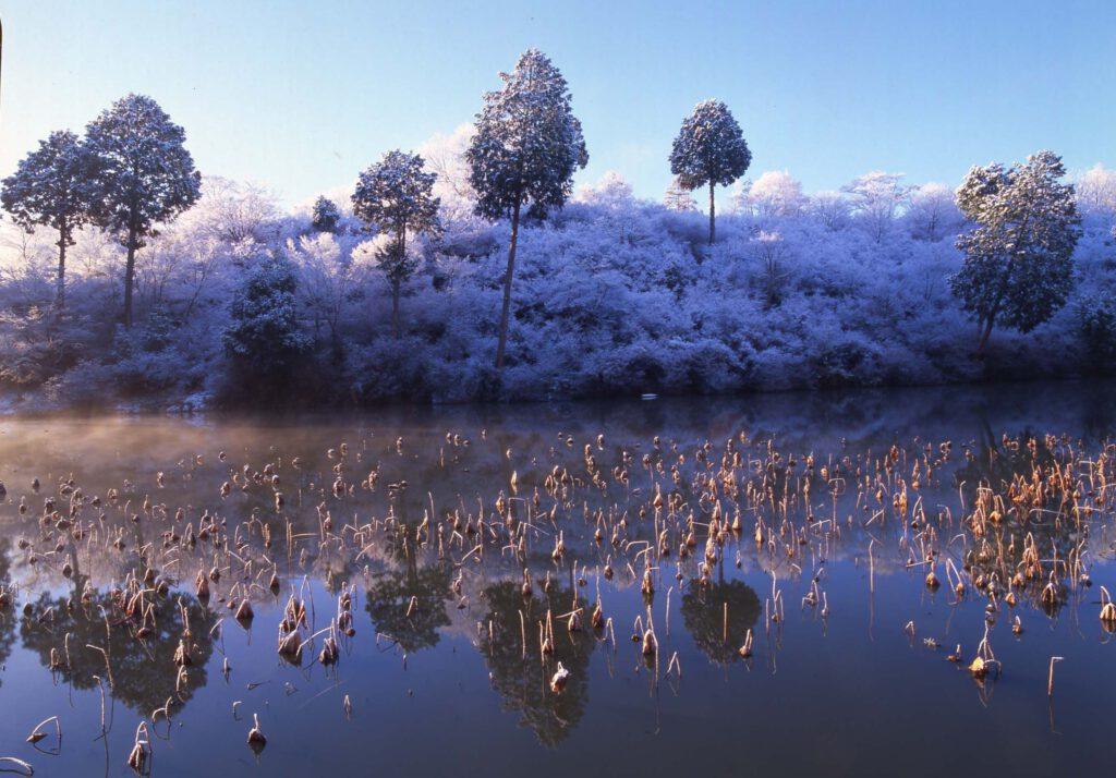 「ハスの池」