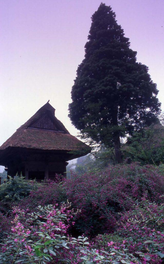 「初秋の朝」