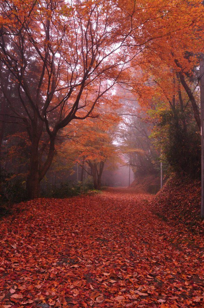 「秋の道」