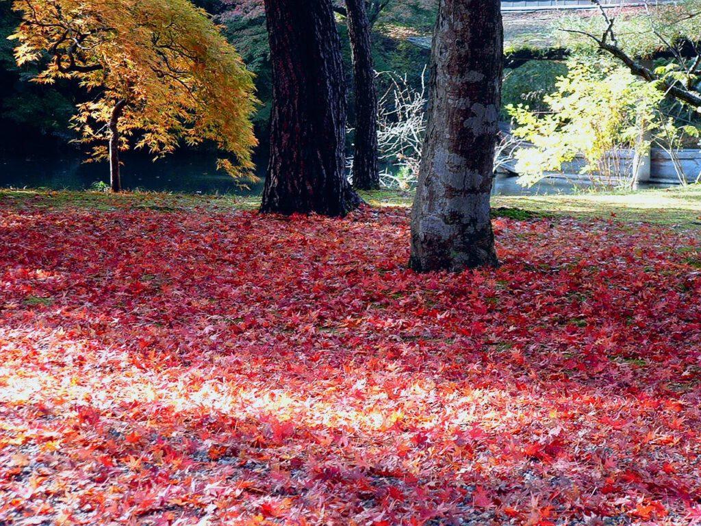 """Late Autumn"""