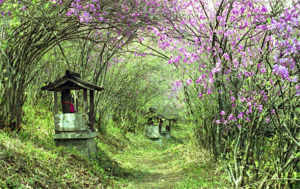 「花のトンネル」