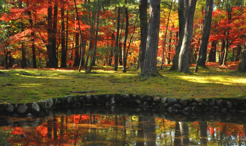 「晩秋の彩り」