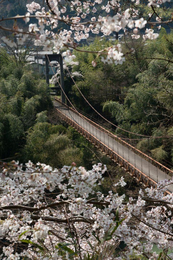 「春の吊橋」