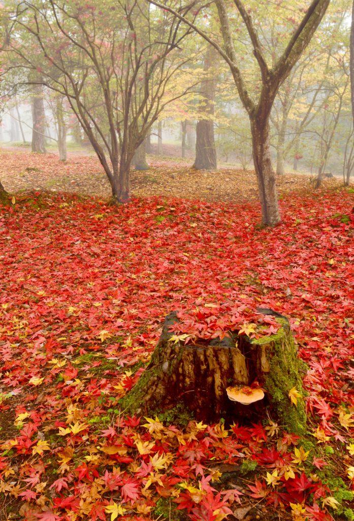「去り行く秋」