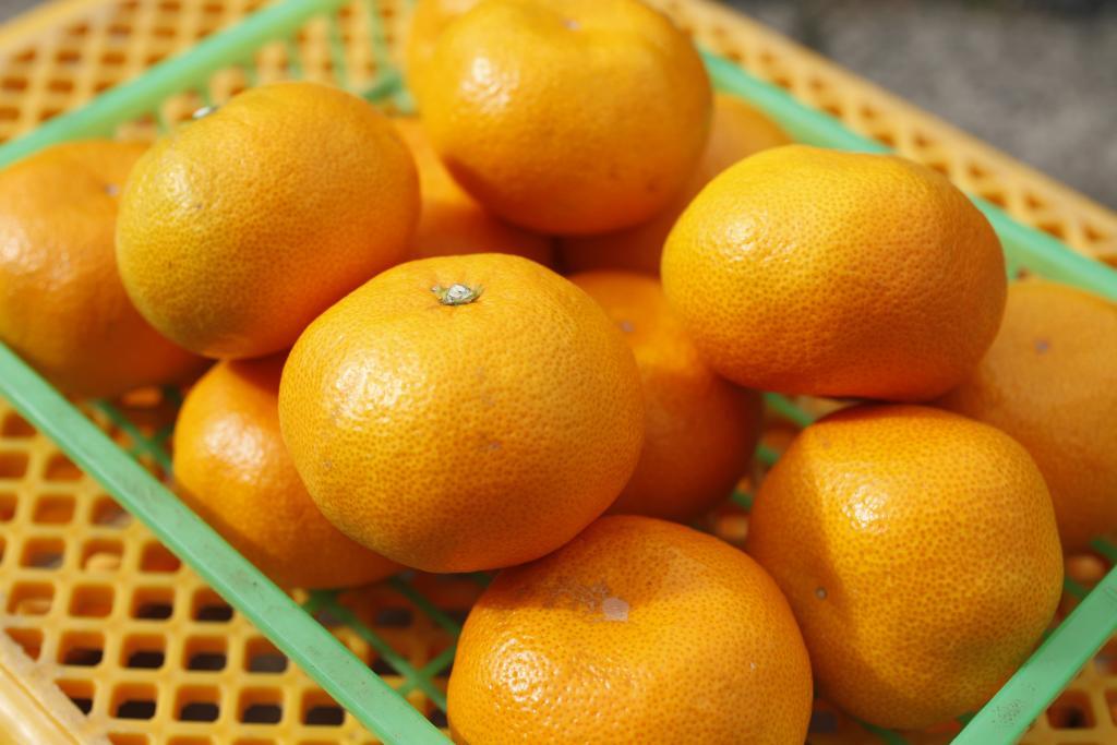 """""""Anju Mikan Oranges"""""""