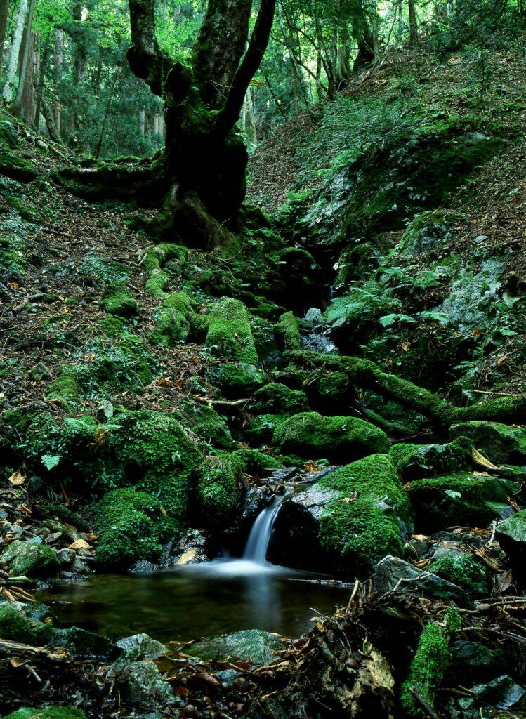 「原始の森」
