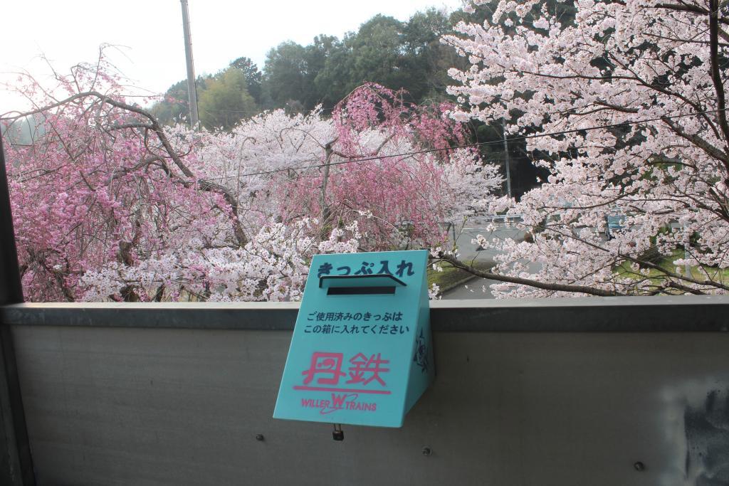 「公庄駅」桜