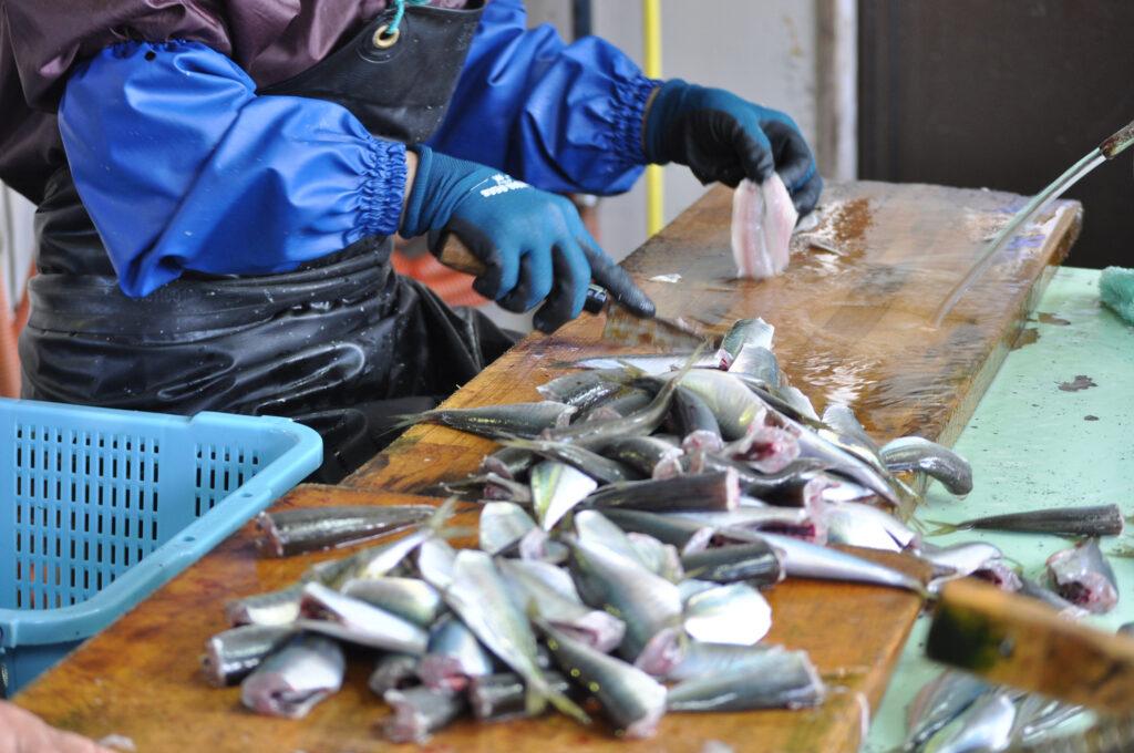 伊根の鮮魚加工風景