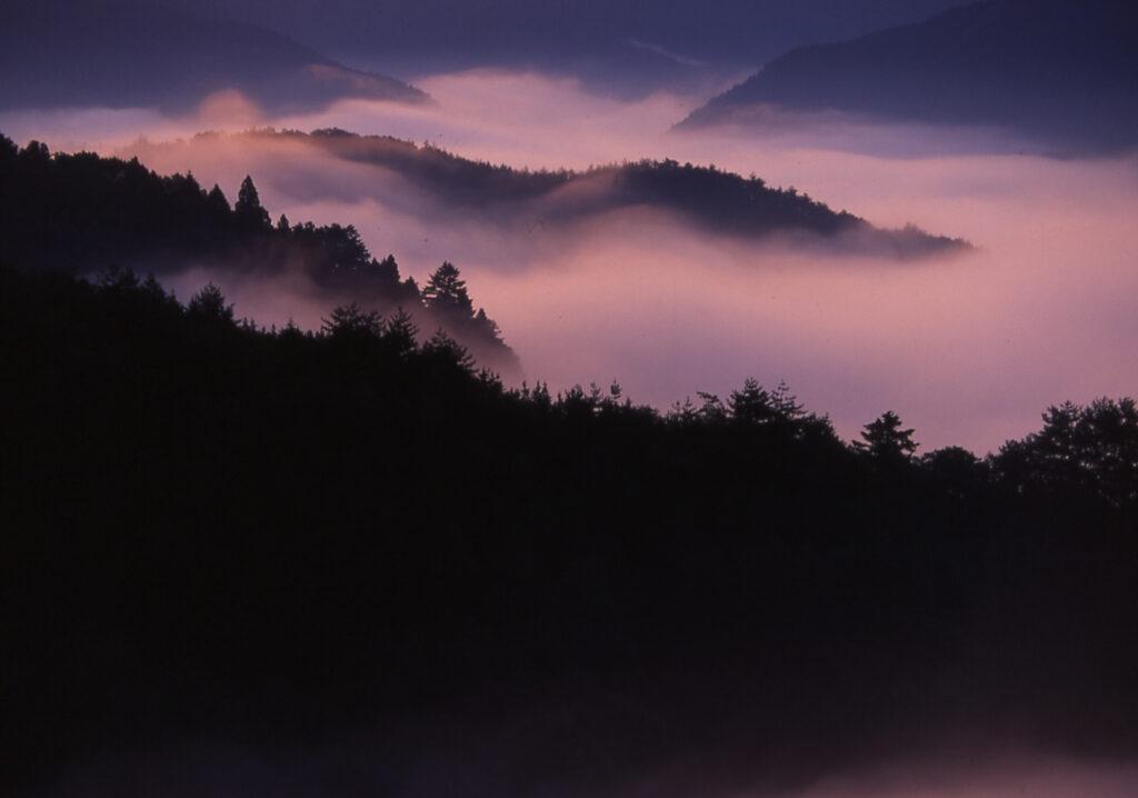 「染まりゆく朝霧」