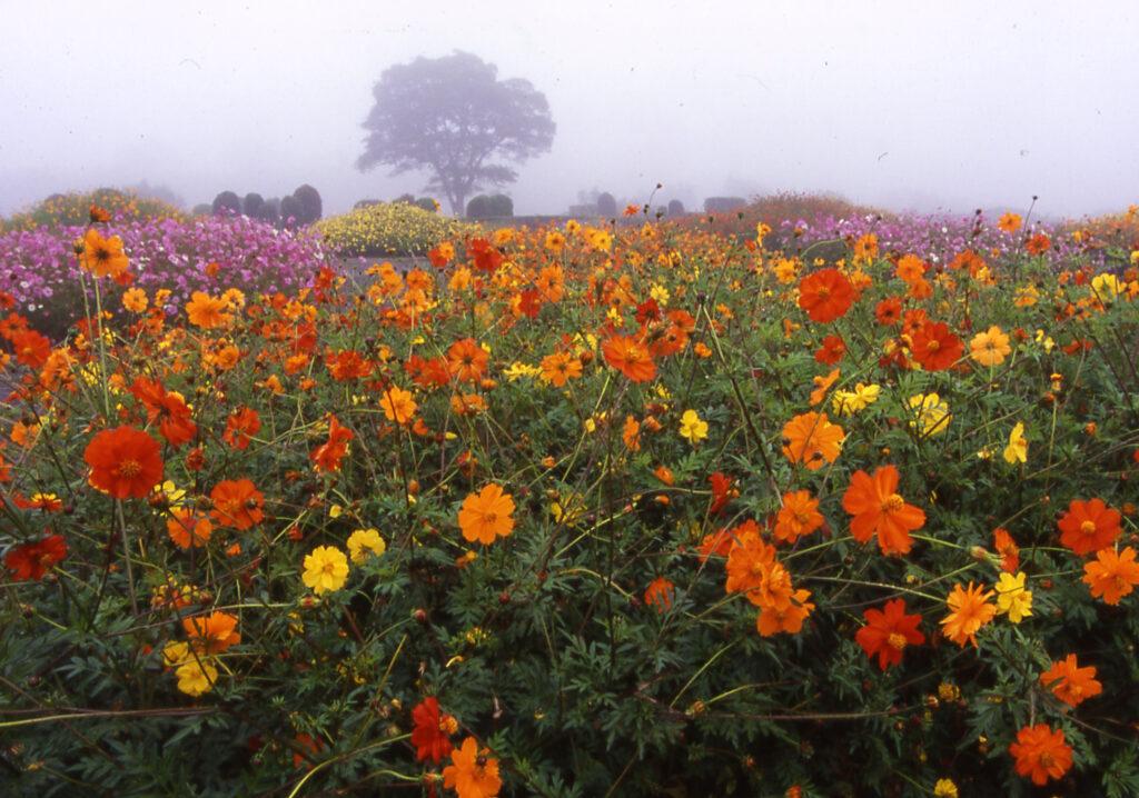 「霧の花園」