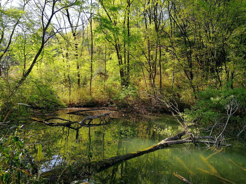 けいはんな記念公園:夏 芽吹きの森