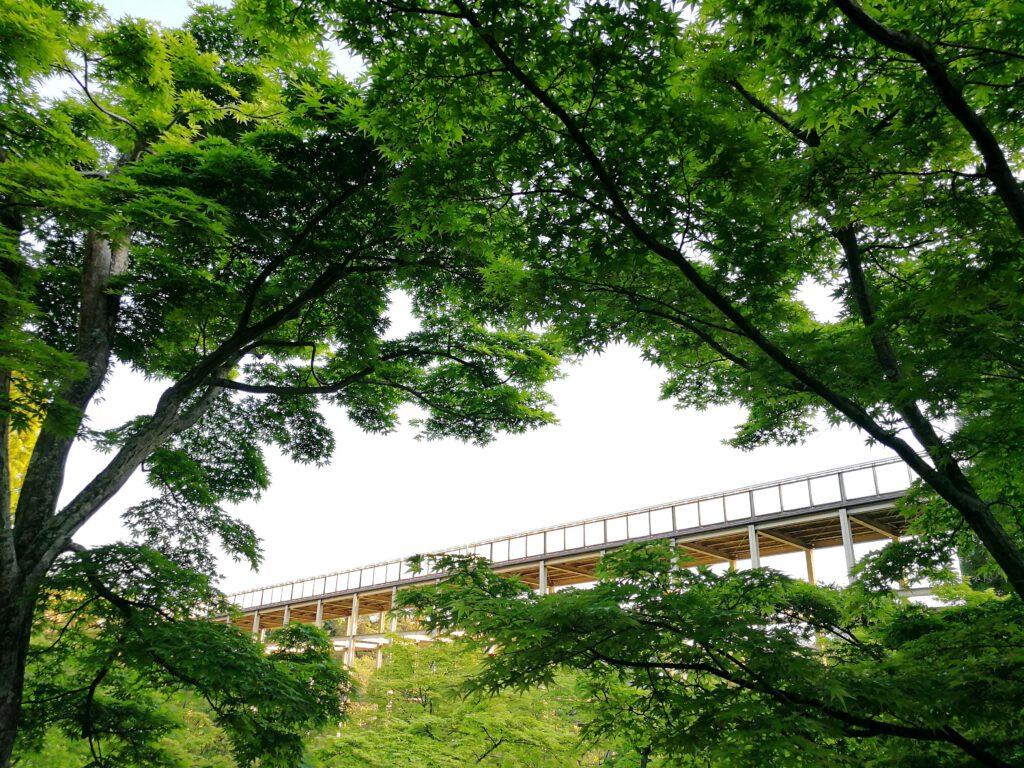 けいはんな記念公園:夏 紅葉谷 色濃く