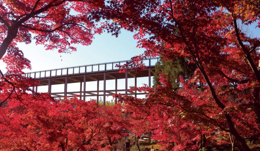 けいはんな記念公園:紅葉
