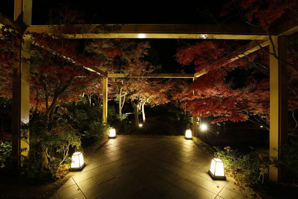 けいはんな記念公園:紅葉ライトアップ1