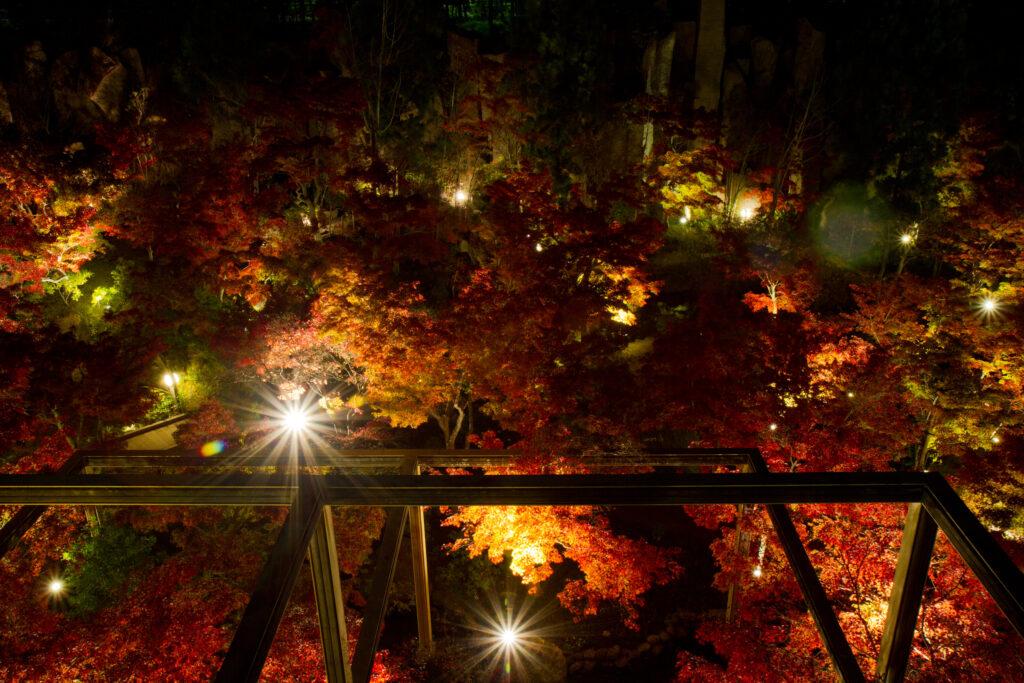 けいはんな記念公園:紅葉ライトアップ2
