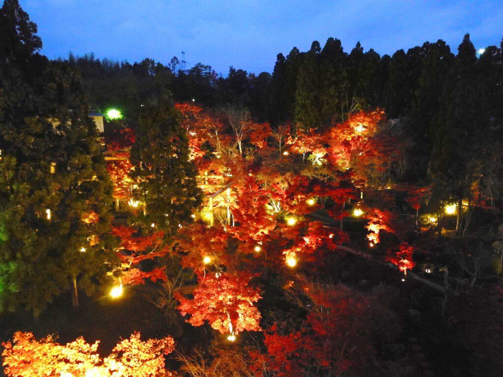 けいはんな記念公園:紅葉ライトアップ3