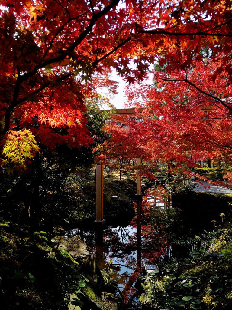けいはんな記念公園:紅葉谷