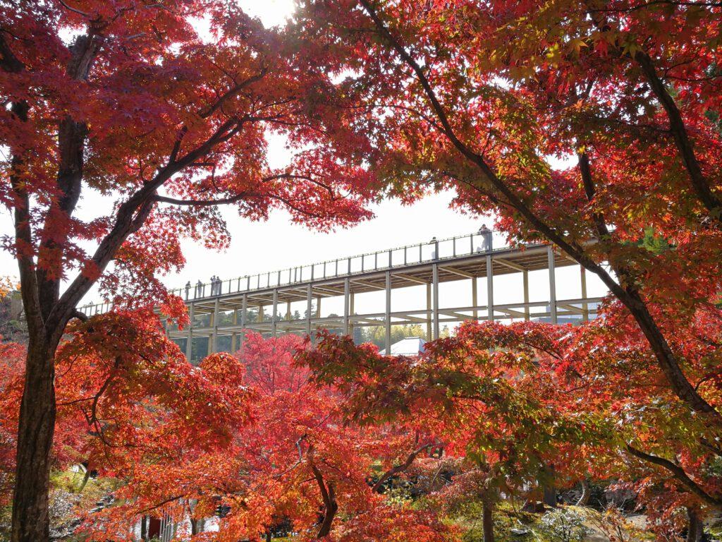 けいはんな記念公園:紅葉谷から観月橋をのぞむ