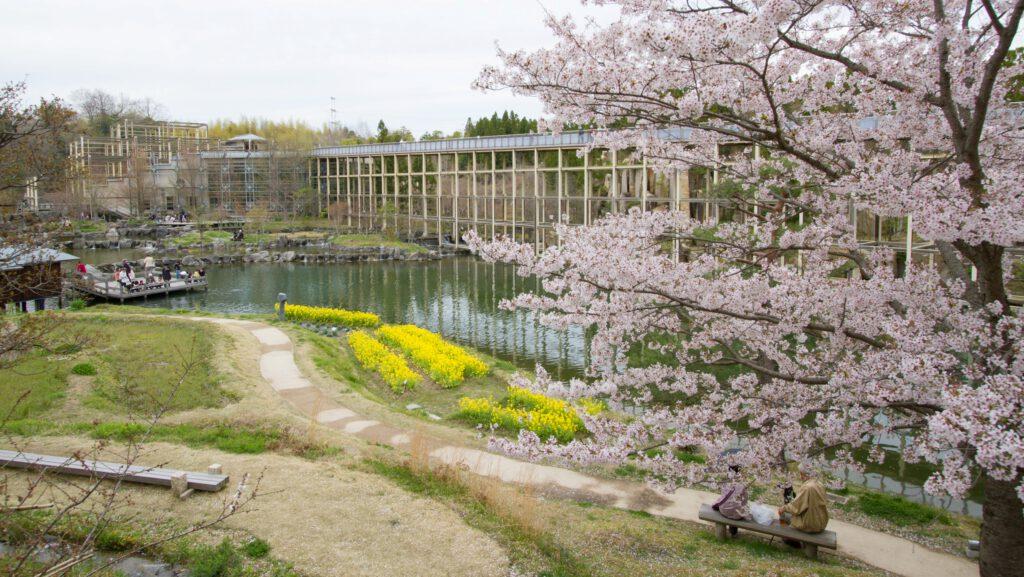 水景園 春 桜 菜の花