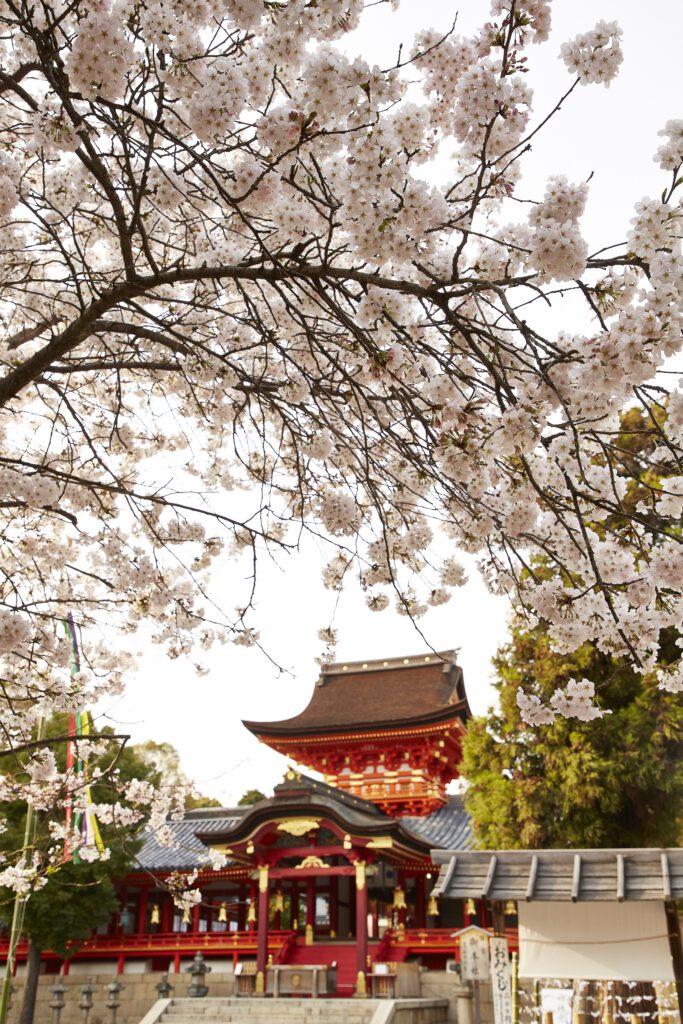石清水八幡宮:桜4