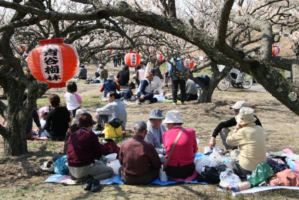 Aodani Plum Grove Plum Festival 1