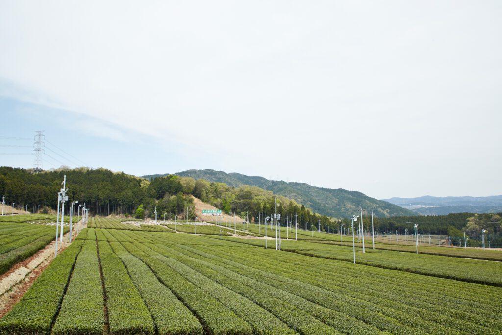 Fureai Community Facility (Nishi-no-Yama Observatory Plaza) 1