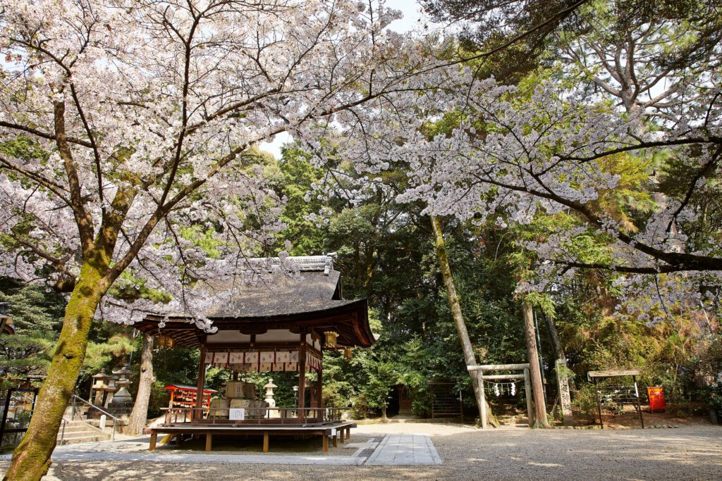 鴻ノ巣山散策道(水度神社):桜1