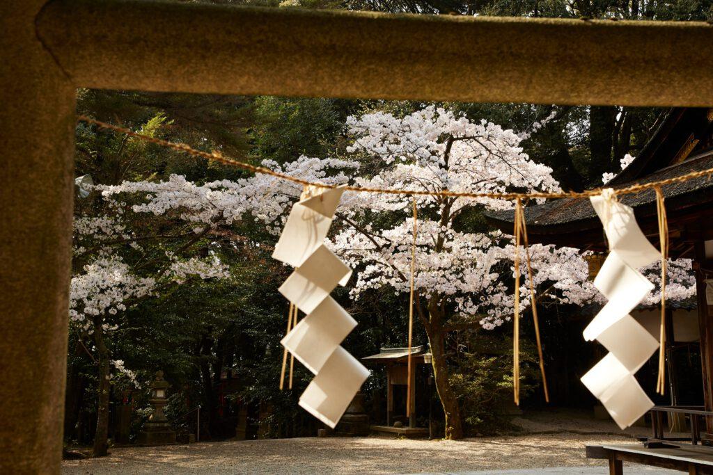 鴻ノ巣山散策道(水度神社):桜2