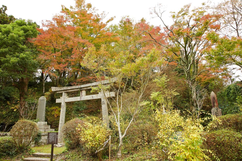 京都府立笠置山自然公園(もみじ公園):紅葉1