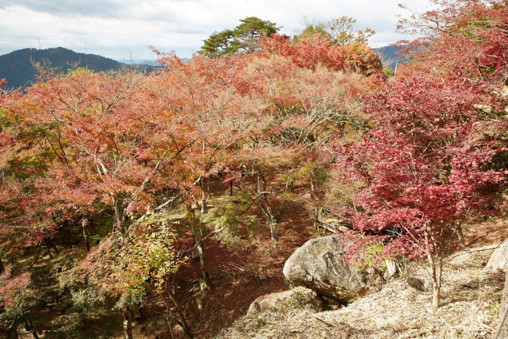 京都府立笠置山自然公園(もみじ公園):紅葉2