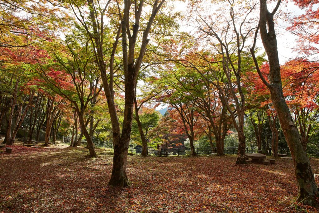 京都府立笠置山自然公園(もみじ公園):紅葉5