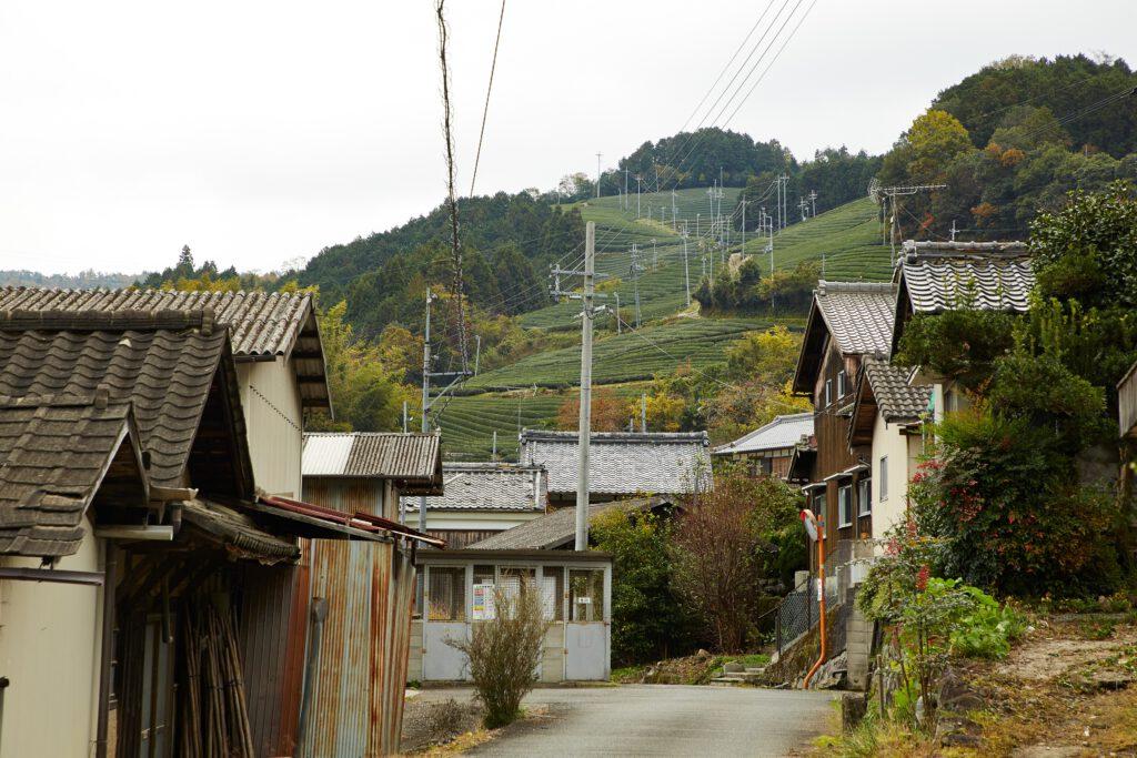 釜塚の茶畑2