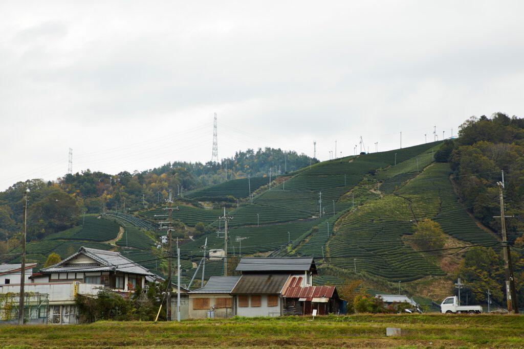 釜塚の茶畑3