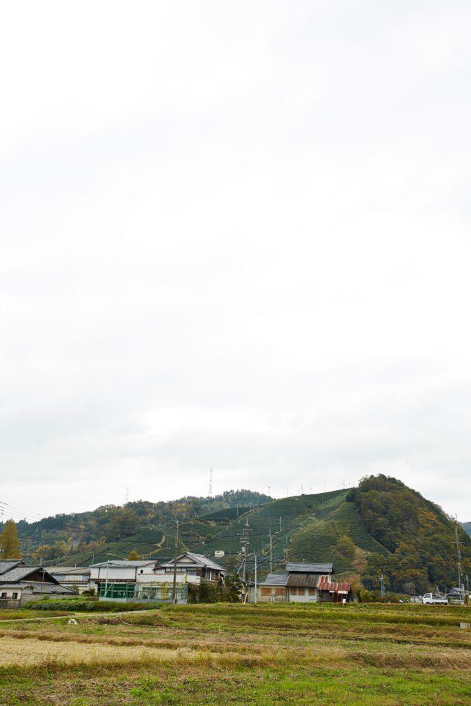 釜塚の茶畑4