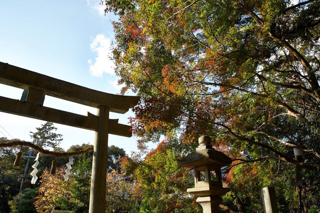 鴻ノ巣山散策道(水度神社):紅葉1