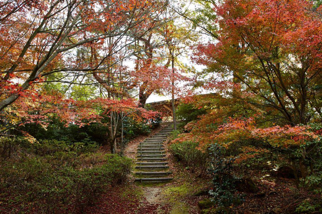 鴻ノ巣山散策道:紅葉2