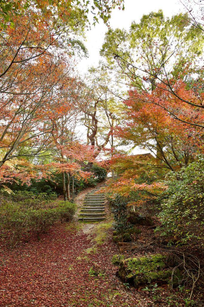 鴻ノ巣山散策道:紅葉3