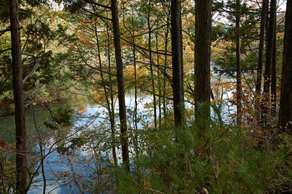 大正池グリーンパーク:紅葉6