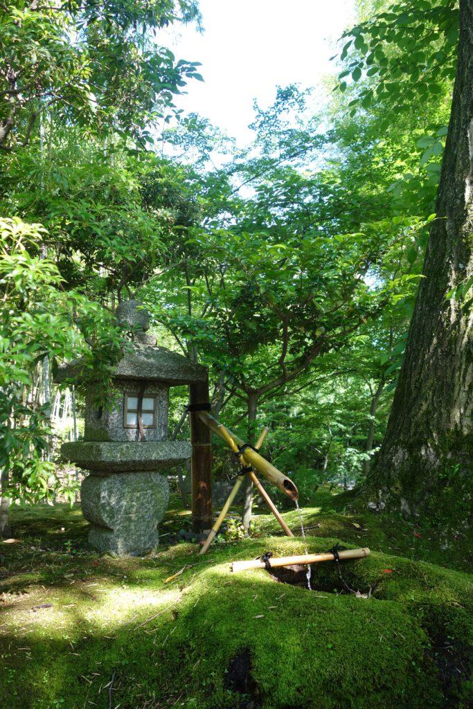 松花堂庭園:青もみじ4