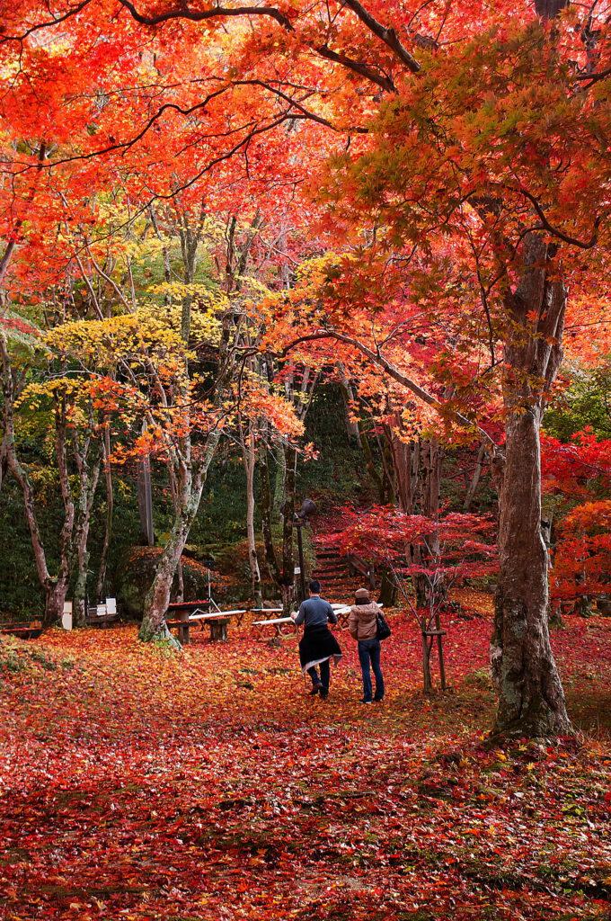 もみじ公園1