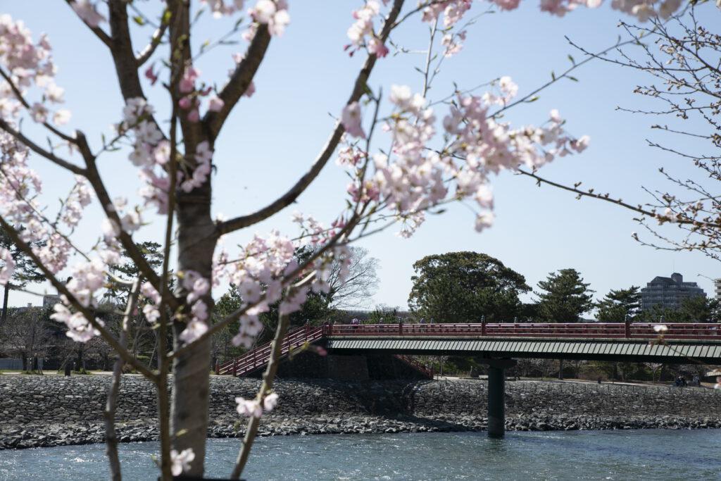 Asagiri-bashi Bridge 3