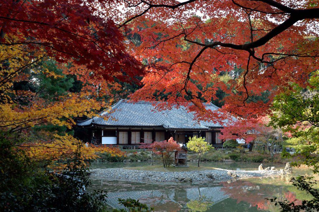 紅葉の浄瑠璃寺本堂(国宝)
