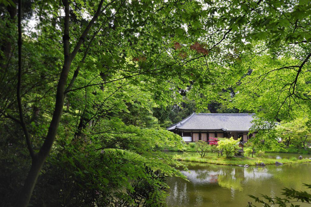 新緑の浄瑠璃寺本堂(国宝)