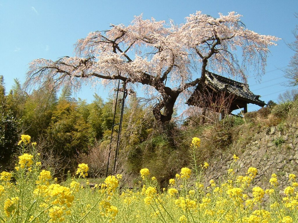 Jizo Zen-in Temple