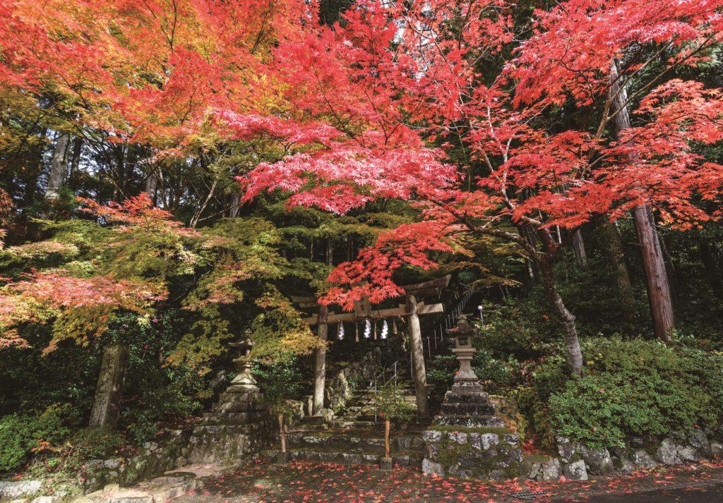 紅葉(大道神社)